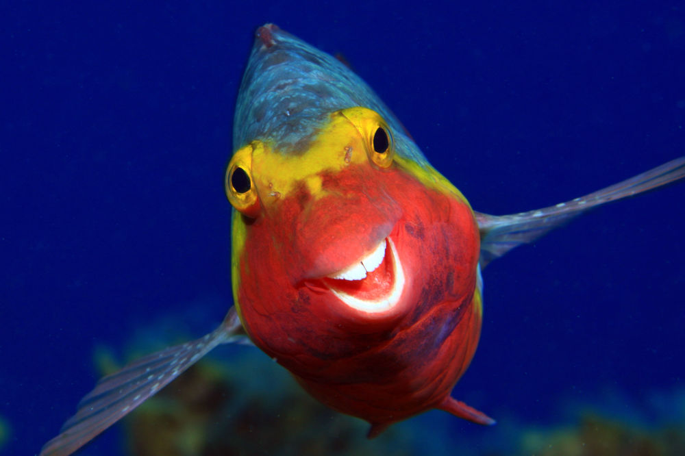 Smiley  - суратчи Arthur Telle Thiemenn, 2020 The Comedy Wildlife Photography Awards финал иштирокчиси.