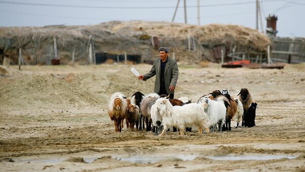 A man walks with livestock at the village of Karateren, near the Aral Sea, south-western Kazakhstan, April 15, 2017. Akespe, home to some 250 people, and Karateren, inhabited by about 150, used to be dominated by fishermen until the water receded too far away - but it is now back in Karateren. - Sputnik Узбекистан